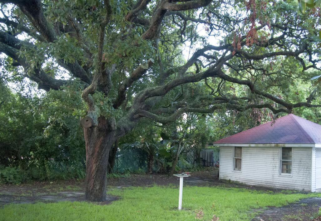 Peabody House Backyard 1
